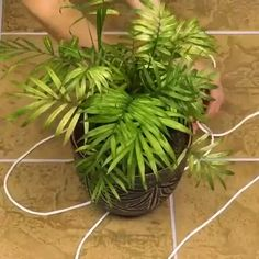 Check Varies Variety of Pots Online by Clicking the Amazon Link #gardening #planter Indoor Garden, Indoor Plants, Outdoor Gardens, House Plants Decor, Plant Decor, Decoration Plante, Hanging Planters, Hanging Plant Diy, Diy Planters