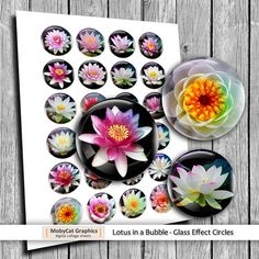 Bubble Lotus Glass Effect images 35mm 30mm 1.5 by MobyCatGraphics