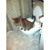 Found it at Wayfair - Cat Toilet Training Kit
