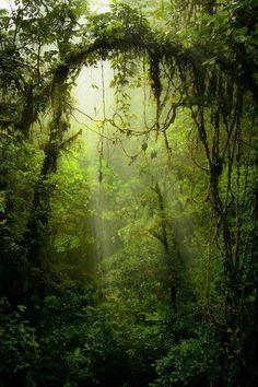 En la tranquilidad de la naturaleza puedo sentir que mi alma tranquila se expresa...