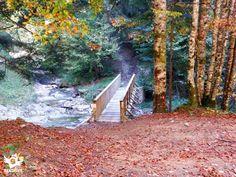 El bosque y el río del sendero errekaidorra - Otxagabia- Navarra Trekking, Cabin, House Styles, Plants, Animals, Home, Decor, Hiking Trails, Places