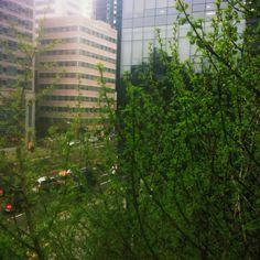 springrain in Seoul