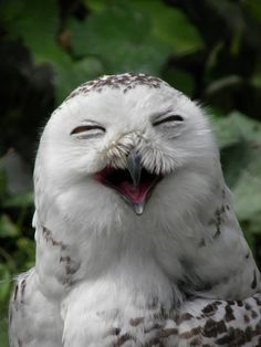 a happy owl