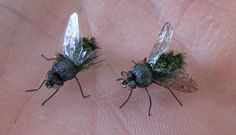 The housefly imitation is very close to the natural Flylady, Home Organisation, Diy Christmas Tree, Cleaning Hacks, Helpful Hints, Life Hacks, Simple, Jungles, Sachets