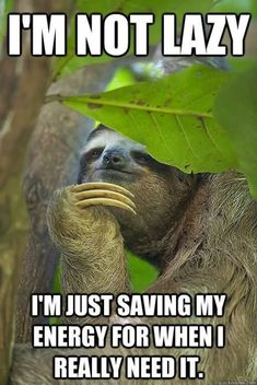 Sloth Funny cute - Horses Funny - Funny Horse Meme - - Have a funny and cute sloth memes to relax.click this in pin for more. The post Sloth Funny cute appeared first on Gag Dad. Cute Animal Quotes, Funny Animal Memes, Cute Funny Animals, Funny Cute, Sloth Memes, Sloth Humor, Funny Sloth Pictures, Funny Pics, Cute Baby Sloths