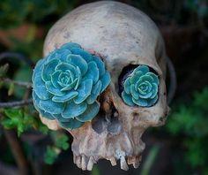flower-eyed skull.