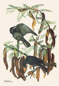 BuyEnlarge 03565-x Fish Crow