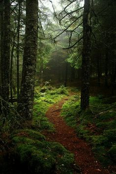 Hike the Fundy Footpath in New Brunswick   49-kilometre trail through backcountry wilderness along the Bay of Fundy coastline. The trail ends at the suspension bridge at Big Salmon River. Trekking alongside 100-metre cliffs, across tidal rivers and through forests of red spruce, balsam fir, yellow birch and maple trees, the footpath provides a test for your backcountry skills. Budget four to five days, and keep your tide chart handy