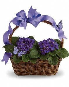 Two pretty African violet plants are nestled into a ribbon-wrapped handled basket. Lovely purple butterflies top off this wonderful gift.  Same Day Flower Delivery