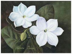 sampaguita flower drawing - Google Search