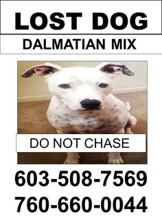 #LOSTDOG 11-6-13 DO NOT CALL, APPROACH OR CHASE CALL 603-508-7569 #PELHAM #WINDHAM #HUDSON #LONDONDERRY #NH RT 111, MAMMOTH RD AND RT 102 https://www.facebook.com/granitestatedogrecovery/posts/639786869410833:0