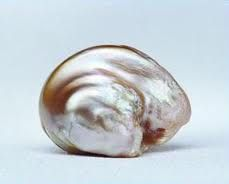 Survival Pearl  Originating in the Tennessee River, the Survival Pearl is one of the rarest, most famous pearls in the world