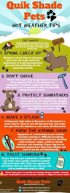 Pet Safety Infographic - how to keep your pets safe in hot weather Dog Health Tips, Pet Health, Dog Safety, Safety Tips, Pet Care Tips, Dog Care, Tier Fotos, Pet Life, Dog Training Tips