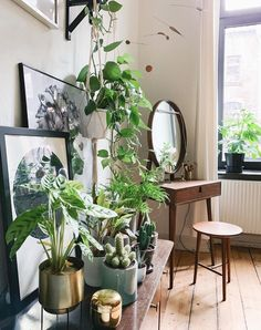 #UOHome Indoor Garden, Indoor Plants, Home And Garden, Pot Plants, Home Bedroom, Zen Bedroom Decor, Bedrooms, Home Decor, Deco Zen