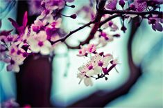 shallow focus photography of pink and white flowers 7 Chakras, Ikebana, Mothers Day Inspirational Quotes, Happy Mothers Day Wishes, The Block, Mohawk Hairstyles, Wedge Hairstyles, Pink And White Flowers, Focus Photography