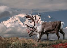 Top 10 Places to See Wildlife in North America : Denali National Park and Preserve. Alaska