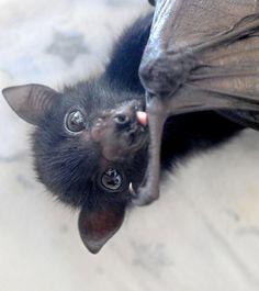 Resultado de imagen de cute bats