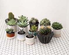 Our 2nd delivery of Cacti and Succulents from @geo_fleur are now available from @yourportofcall and on our online store! Get down here before our staff by them all @_josephday_ @kezdogbillionaire @jenniferetchells. . . . . .  #plants #plantlife #cacti #cactus #succulents #succulent #desertplants #home #house #interior #interiorstyle #ceramics #lifestyle #cornwall #stives #shoplocal #geofleur #indoorplants #concrete #plant #plantstagram #botanical #vscoplants #plantsofinstagram #geometric