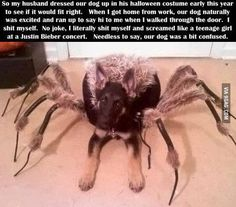 I don't know what's funnier--the person's reaction or the dog's!
