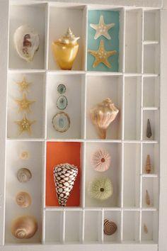 Seashell Display, Seashell Art, Seashell Crafts, Beach Crafts, Beach Shadow Boxes, Seashell Shadow Boxes, Seashell Projects, Driftwood Crafts, Shell Collection