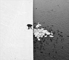 Man Feeding Swans in the Snow by Marcin Ryzcek
