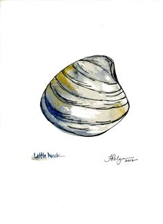 Little Neck Clam Print - Watercolor and Pen Illustration by Tiffany Pelczar Little Neck Clams, Pen Illustration, Watercolor Paintings, Watercolours, Natural Forms, Ballpoint Pen, Creative Inspiration, Mussels, Oysters