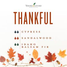 Cypress Essential Oil - 15 ml Give thanks and be thankful this Thanksgiving by diffusing this holiday essential oil blend using Cypress, Sandalwood, and Idaho Balsam Fir essential oils. Essential Oils For Headaches, Yl Essential Oils, Essential Oil Diffuser Blends, Young Living Essential Oils, Yl Oils, Henna Designs, Cypress Essential Oil, Holiday Essentials, Young Living Oils