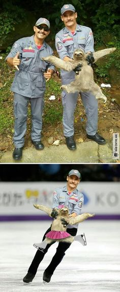The internet is no stranger to Photoshop Battles. They are probably the best thing about the internet, too. All sorts of Donald Trump and awesome animal pictures distorted and edited by hilarious Photoshop artists. Funny Koala, Funny Animals, Cute Animals, Koala Meme, Funny Sloth, Haha Funny, Funny Cute, Funny Memes, Funny Photoshop