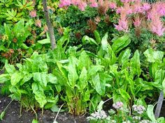 These unfussy, long-lived perennial plants pump out beautiful foliage and flowers year after year. http://gardenseason.com/perennial-plants-gardening/