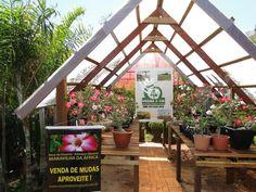 Parceiros - Rosa do Deserto Brasil
