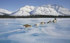 Gates of the Arctic National Park and Preserve, Alaska    Gates of the Arctic National Park - Bucket List - Dog sled across the ...
