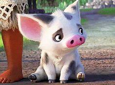 adorable Pua is adorable (▰˘◡˘▰) #baby pua!! :')