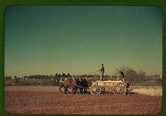 Georgia oat field? Southern U.S. (LOC) by The Library of Congress, via Flickr