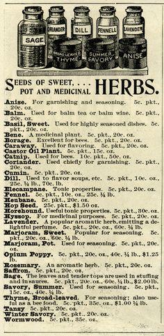 vintage herb clipart