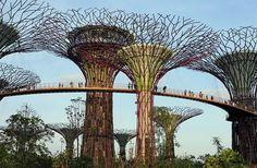 Botanical Garden, Singapore