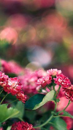 Flora GardenBokeh #iPhone #5s #Wallpaper