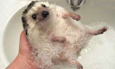 16 Cute Pictures You Need To See Before You Die
