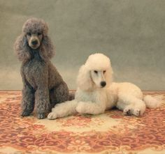 Learn How to Make Miniature Animals and Birds : Pair of clipped standard poodles with wool coats in scale by Kerri Pajutee Photo Courtesy Kerri Pajutee Copyright 2008 Used With Permission Needle Felted Animals, Felt Animals, Needle Felting, Animals And Pets, Cute Animals, Animal Sculptures, Clay Sculptures, Mini Dogs, Felt Dogs