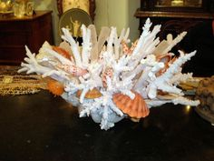 coral arrangement in clam shell, Christa's south seashells