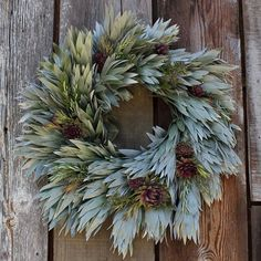 San Francisco's Flora Grubb Gardens, the Fresh Silvertree Wreath has shimmery leucadendron argenteum leaves, rosemary stems, sempervivum rosettes, and kalanchoe cuttings. It measures approximately 24 inches in diameter. For more gift ideas, see Flora Grubb's Living Ornaments.