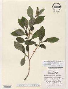 Pressed Leaves, Plant Leaves, Plants, Plant, Planets
