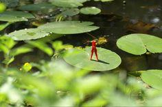 0026 Der Froschkönig | The frog king #klammerpic #rot #clothespin #red #ontour