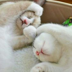 http://cybergata.tumblr.com/post/79944204076/me-still-in-bed-lazy-kitten-instacat  http://cybergata.tumblr.com/