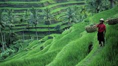 Bali Tour Package 4 days 3 Nights | The Bali Package