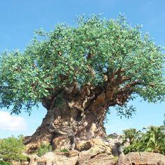 Tree of Life at Disney's Animal Kingdom at Walt Disney World in Orlando, Florida, USA Walt Disney World Orlando, Disney Parks, Magic Kingdom, Tree Of Life, Animal Kingdom, Disneyland, Beautiful Places, Florida Usa, Orlando Florida