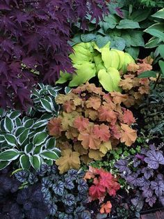 Tim Vojt is pushing coral bells and hybrids today - Fine Gardening Shade Landscaping, Garden Landscaping, Landscaping Ideas, Shade Garden Plants, Japanese Garden Plants, Japanese Garden Landscape, Ferns Garden, Shaded Garden, Garden Planters