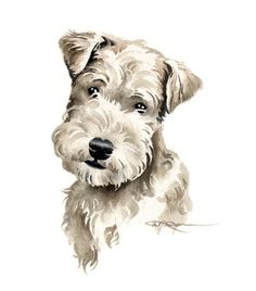 Lakeland Terrier Puppy Art Print by Watercolor Artist DJ Rogers Fox Terriers, Wire Fox Terrier, Unusual Dog Breeds, Best Dog Breeds, Lakeland Terrier Puppies, Big Dog Toys, Outdoor Dog Toys, Dog Breeds Little, Watercolor Animals