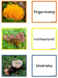 svamp3 Educational Activities For Kids, Outdoor Activities, Learn Swedish, Swedish Language, Fall Preschool, Nature Study, Teacher Hacks, Science And Nature, Pre School