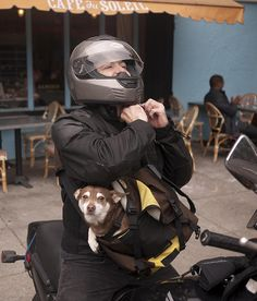 Chest Protector? Bike Dog in San Francisco by Livengood AK, via Flickr