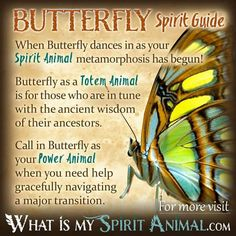 Hundreds of in-depth Spirit, Totem, & Power Animal Meanings! Learn the spiritual symbolism and meaning of your Animal Spirit Guide, Totem, & Power Animal! Butterfly Spirit Animal, Spirit Animal Totem, Butterfly Quotes, Animal Spirit Guides, Your Spirit Animal, Animal Totems, Dragonfly Quotes, Animal Meanings, Animal Symbolism